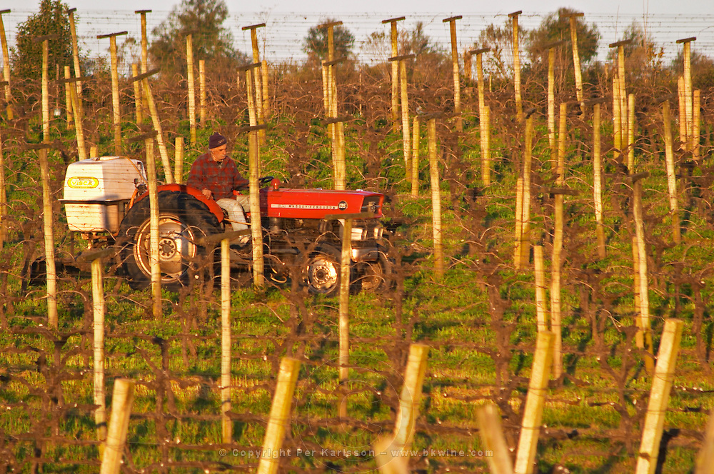 A vineyard worker on a Massey Ferguson tractor treating the vines, seen through metal wires in the vineyard. Bodega Carlos Pizzorno Winery, Canelon Chico, Canelones, Uruguay, South America
