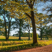Appleton Farms & Grass Rides in Ipswich and Hamilton, MA is protected by The Trustees of Reservations.
