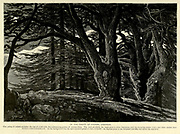 Grove of Cedars, Lebanon Engraving on Wood from Picturesque Palestine, Sinai and Egypt by Wilson, Charles William, Sir, 1836-1905; Lane-Poole, Stanley, 1854-1931 Volume 2. Published in New York by D. Appleton in 1881-1884