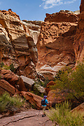 In Capitol Reef National Park, we hiked impressive sandstone gorges via Chimney Rock Loop trail plus a wonderful side trip down Chimney Rock Canyon as far as Spring Canyon (totalling 7 miles round trip with 1300 ft gain), near Torrey, Utah, USA.