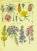 Parts of Fructification (Sexual Organs) from Vol 1 of the book The universal herbal : or botanical, medical and agricultural dictionary : containing an account of all known plants in the world, arranged according to the Linnean system. Specifying the uses to which they are or may be applied By Thomas Green,  Published in 1816 by Nuttall, Fisher & Co. in Liverpool and Printed at the Caxton Press by H. Fisher