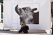A woman taking a photo in front of a cow picture by Thierry des Ouches at the Exhibition Vaches (Cows) on place Vendôme Vendome in Paris, France Europe
