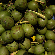 Coconuts are available in abundance and are a popular refreshing natural drink sold along the beaches of Rio de Janeiro throughout the year. Copacabana Beach, Rio de Janeiro,  Brazil. 9th July 2010. Photo Tim Clayton..