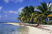 beach and coconut palm trees, Northern Two Cayes, Lighthouse Reef Atoll, Belize, Central America ( Caribbean Sea )