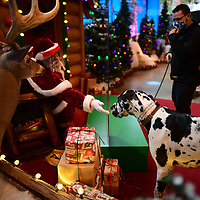 HARRISBURG, PA:  Andrew Leubecker, 40, in his 2nd year portraying Santa, sits behind plexiglass due to the coronavirus (COVID-19) pandemic, greets a Great Dane after taking photos at a Bass Pro Shop's Outdoor World in Harrisburg, PA on December 12, 2020. The pandemic has forced difficult decisions about maintaining the holiday tradition of visits to Santa Claus versus safety concerns.  Plexiglass dividers, face shields, and physical distancing are among the precautions for those locations that have proceeded with Santa photo opportunities.  CREDIT:  Mark Makela for The New York Times