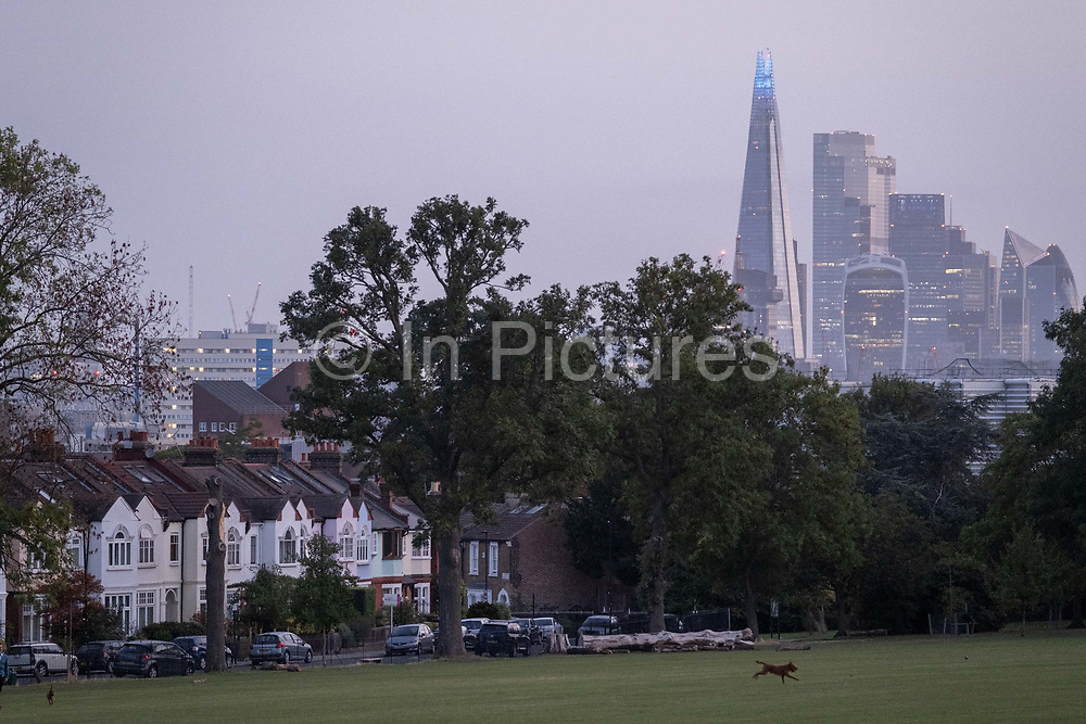 A dog chases crows in front of south London suburban homes with a background of the Shard tower and City office buildings, in Ruskin Park, Lambeth, on 17th September 2020, in London, England.