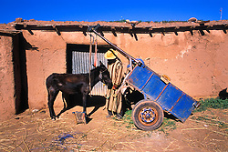 Donkey, cart and owner, Ait Ourir souk, near Marrakech, Morocco.
