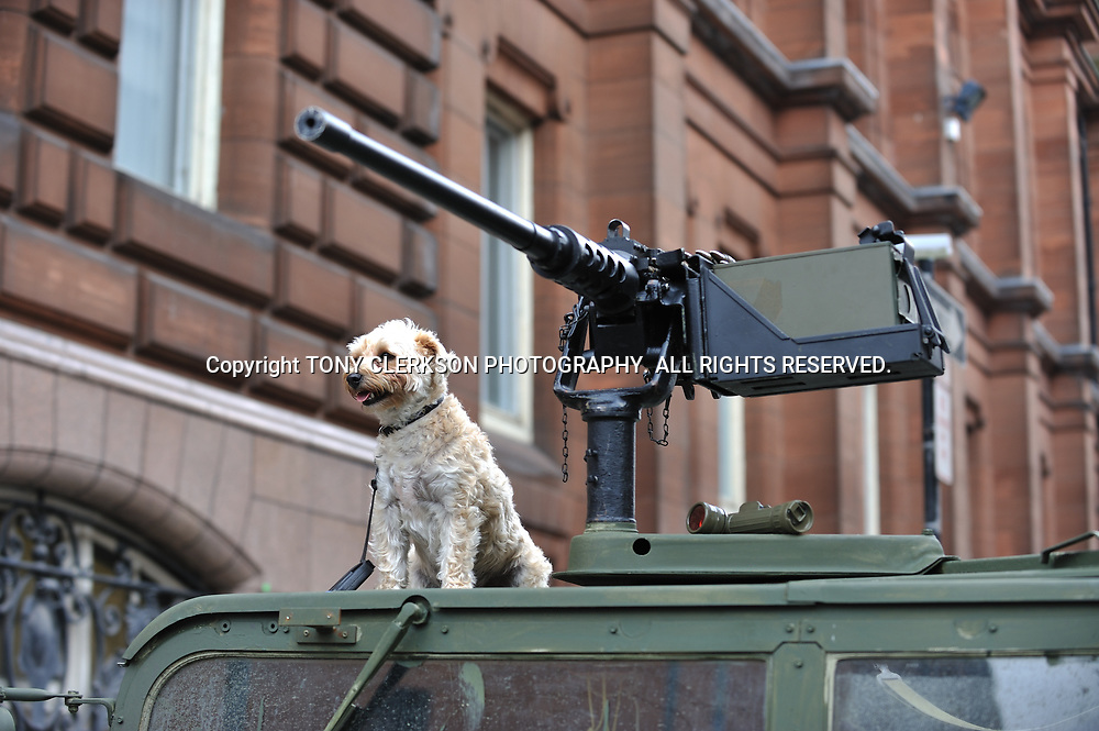 A dog sits on an armoured car in George Street as Glasgow is transformed into Philadelphia for World War Z, a film starring Brad Pitt.