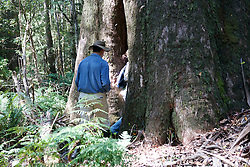 David Lindenmayer Heading Into Base Of Tree