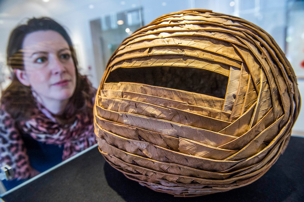 Sweet Chesnut Leaves & Blackthorns, Dumfriesshire, 2013 by Andy Goldsworthy - It's Our World Auction in support of The Big Draw and Jupiter Artland Foundation, Chrisites, London, UK - Over 40 leading artists including David Hockney, Sir Antony Gormley, David Nash, Sir Peter Blake, Yinka Shonibare, Sir Quentin Blake, Emily Young and Maggi Hambling have committed artworks to the be sold at on 10 March 2016. The Auction is the culmination of a mass participation environmental arts project, promoting sustainability for future generations through art. Money raised will support The Big Draw, an arts education charity that works across the UK to promote visual