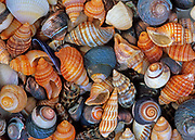 Shells on beach, New Zealand