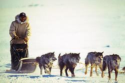 Dog Team Races