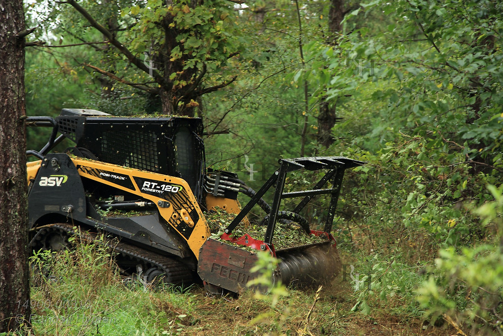 Forestry mulcher clears and shreds invasive species that choke undergrowth between pine trees in Kettle Moraine State Forest; Eagle, Wisconsin.