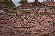 The ceramic fungus (Xylobolus frustulatus) on underside of old fallen oak tree (Quercus robur), Gauja National Park (Gaujas Nacionālais parks), Latvia Ⓒ Davis Ulands | davisulands.com