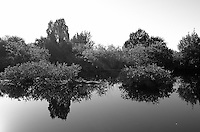 Can You Find the Alligator? Reflections on a Canal along Black Point Wildlife Drive in Merritt Island National Wildlife Refuge. Image taken with a Leica X2 camera (ISO 100, 24 mm, f/5.6, 1/640). In camera B&W.