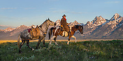 First hints of light hit a wrangler and his horses with a back drop of rugged mountain peaks in the high country of Jackson Hole, WY.