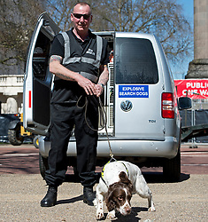© London News Pictures. 21/04/2013. London, UK. Explosive sniffer dogs searching vehicles on The Mall in London at the finnish line of the London Marathon which takes place today (21/04/2013) Sucurity has been increased at the London Marathon following a bomb attack at the Boston marathon earlier this week. Photo credit : Ben Cawthra/LNP