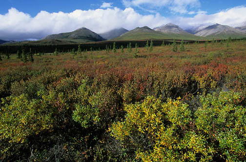Denali National Park, Scenic. Mount McKinley. Alaska.