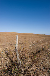 A barbed wire fence surrounds the rolling hills of the nearly 11,000 acre Tallgrass Prairie National Preserve in the Flint Hills of Kansas in Chase County near the towns of Strong City and Cottonwood Falls. Less than four percent of the original 140 million acres of tallgrass prairie remains in North America. Most of the remaining tallgrass prairie is in the Flint Hills in Kansas. Tallgrass Prairie National Preserve is the only unit of the National Park Service dedicated to the preservation of the tallgrass prairie ecosystem. The Tallgrass Prairie National Preserve is co-managed with The Nature Conservancy.