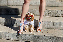 Street style, dog Little Lola Sunshine arriving at Schiaparelli Fall-Winter 2018-2019 Haute Couture show held at Opera Garnier, in Paris, France, on July 2nd, 2018. Photo by Marie-Paola Bertrand-Hillion/ABACAPRESS.COM