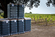 New wine bottles for filling at vineyard at Chateau Fontcaille Bellevue in the Bordeaux region of France