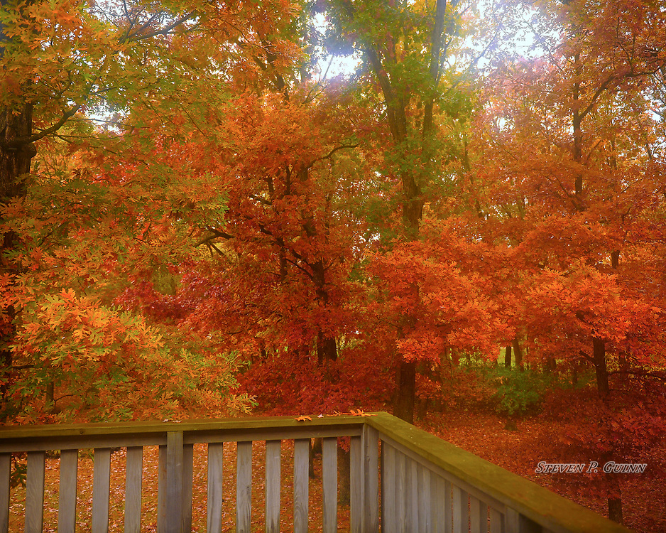 """I captured this nature portrait of my backyard on October 31st, 2019. I was adjusting settings on my camera and taking test shots to make sure that I configured it correctly and produced this image. When I saw this image, I was shocked at how vibrant and sharp that it turned out to be, especially since I shot it through a window. I adjusted the white balance a little bit """"warmer' (more amber) to emphasize the warm colors of the entire image. I love how the window gave the image a subtle soft focus effect as well. After I went through the test shots that I captured, I was amazed at how well what was intended to be a test shot became an excellent fine art print.<br /> <br /> Printed on Hahnemühle German Etching paper. Limited to 150 productions per size.<br /> <br /> Framed prints are available in 20"""" x 16"""", 30"""" x 24"""", 40"""" x 30"""", and 50"""" x 40"""" sizes."""
