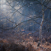 Detail of the forest at Sutton heath in Suffolk