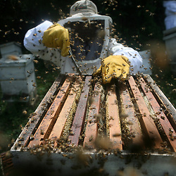 Honey production, Guatemala