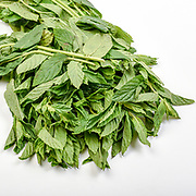 Fresh and organic Mentha AKA mint, on white background