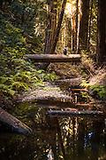 Butano State Park Nature Hike