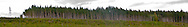 a Douglas Fir forest stands abruptly above a clearcut forest on the Toandos Peninsula in western Puget Sound in Washington state, USA. panorama