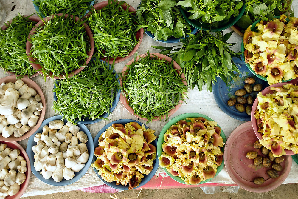 Buffalo mouth grass, dok kare flowers, hog plums and straw mushrooms for sale at Hua Kua evening market on the outskirts of Vientiane, Lao PDR. A large variety of local products are available for sale in fresh markets all over Laos, all being sold on small individual stalls.