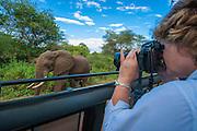 Safari visitor photographs elephant, Lake Manyara National Park, Tanzania