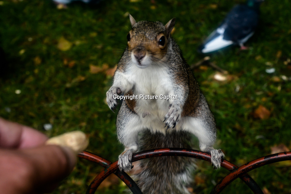 Photographer feed nuts to squirrel and pigeon in Hype park, London, UK. 5 October 2021.