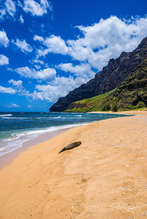Endangered Hawaiian monk seal (Monachus schauinslandi) on Miloli'i Beach, Na Pali Coast, Island of Kauai, Hawaii USA