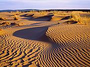 Ripples and grasses on the Great Kobuk Sand Dunes, Kobuk Valley National Park, Alaska.