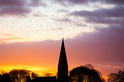 © Licensed to London News Pictures. 04/01/2017. Baldersby Saint James UK. Birds fly over St James's church in the North Yorkshire village of Baldersby Saint James at dawn this morning. Photo credit: Andrew McCaren/LNP
