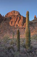Kofa National Wildlife Refuge Arizona