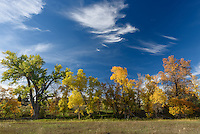 The trees at Welch Ranch Recreation Area were very colorful on this September afternoon.