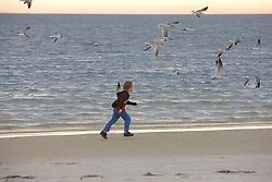 Boy Running After Birds Laughing Gulls
