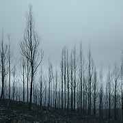 Summer has passed in the Central regions of Portugal and Winter has arrived, after the destructive wilfires that destroyed large areas of forest.