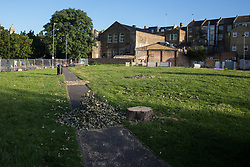 London, UK. 14th August, 2021. One of two trees felled on 11th August by Southwark Council on Peckham Green, which it plans to develop as public housing. Peckham Green is a 1.4-acre public park off Peckham High Street, one of the most polluted roads in London, in a borough which is ranked fifth-worst in London and eighth-worst in the UK for easy access to green space, and local residents and campaigners have been protesting that they were not consulted by Southwark Council in relation to its plans.