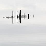 Timber Ponds VIII, Kelburn, Inverclyde, Scotland.