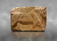 Phrygian relief sculpted orthostat stone panel, 1200-700 B.C. Anatolian Civilisations Museum, Ankara, Turkey. Figure of a walking bull. <br /> <br /> Against a grey art background. .<br /> <br /> If you prefer you can also buy from our ALAMY PHOTO LIBRARY  Collection visit : https://www.alamy.com/portfolio/paul-williams-funkystock/phrygian-antiquities.html  - Type into the LOWER SEARCH WITHIN GALLERY box to refine search by adding background colour, place, museum etc<br /> <br /> Visit our CLASSICAL WORLD PHOTO COLLECTIONS for more photos to download or buy as wall art prints https://funkystock.photoshelter.com/gallery-collection/Classical-Era-Historic-Sites-Archaeological-Sites-Pictures-Images/C0000g4bSGiDL9rw