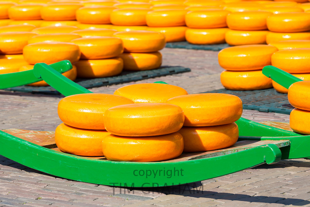 Wheels / rounds of Gouda cheese on sled / stretcher at Waagplein Square, Alkmaar cheese market, The Netherlands
