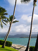 A boy relaxes in a hammock next to the beach on Daydream Island; Whitsunday Islands, QLD, Australia