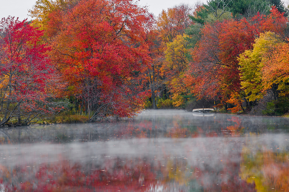 Red Maples fall colors with reflections and fog dawn on Furnace Brook pond, Stafford, CT