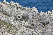 Fossilised remains of tree stumps near Lulworth, Dorset.