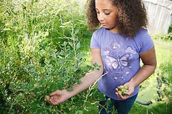 Girl picking gooseberries from bush