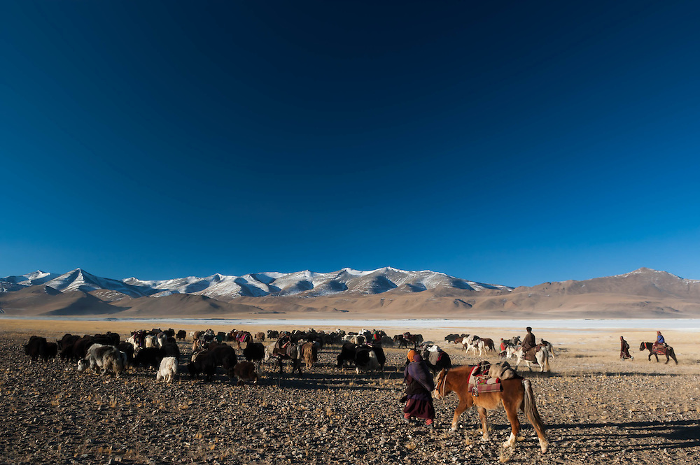 Rusphu nomads move seasonally each year. On this bitterly cold January morning, the nomads were moving from a major settlement called Thukje towards the Southwestern side of the lake.